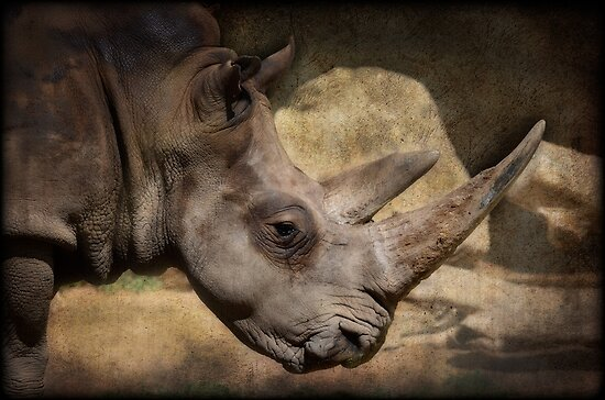 Rhino  by Saija  Lehtonen
