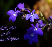 Sweet Lobelia - Geluk by steppeland-2