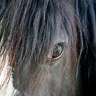 Horse eye by J-images