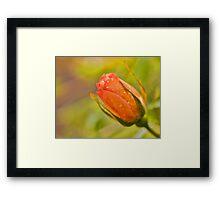Morning Rose Framed Print
