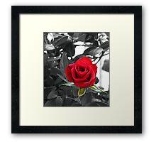 Miniature Rose Bud - Mother's Day Framed Print
