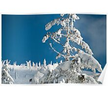 Frozen trees Poster