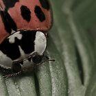 Ladybird Face by Carl Revell