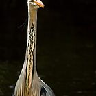 Portrait Of A Heron by Don Alexander Lumsden (Echo7)