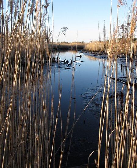 Wetlands At Low Tide by RVogler