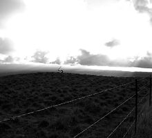 Along The Road To Mauna Kea by Padmasana