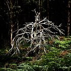Ghost Tree by Tania Russell