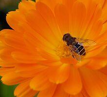 Orange flower by Tony Worrall
