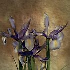 Iris's by Catherine Hamilton-Veal  ©
