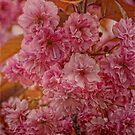 Blossom by Karen  Betts