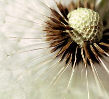 Blowball...(3) by Bob Daalder