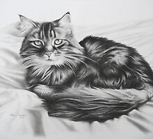 Comfy Cat by Peter Lawton