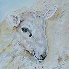 Fluffy Sheep by ddonovan