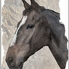 Profile of Dash by almaalice