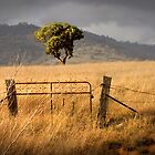 Tree of Light and Dark - Kelly Rd, Williamsdale, ACT, Australia. by Martin Lomé