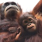 Mother & baby Orangutan, Borneo  by Carole-Anne
