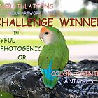 CHALLENGE WINNER BANNER by Heidi Mooney-Hill