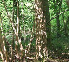 Dappled Woodland. by Heather Goodwin