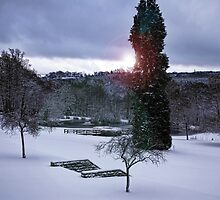 Ashdown Park Winter by Marilyn O'Loughlin