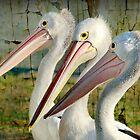 Pelican Brief by Tainia Finlay