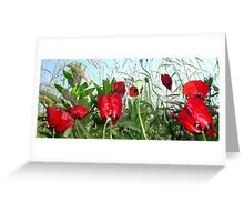 Landscape Close Up Poppies Against Morning Sky Greeting Card