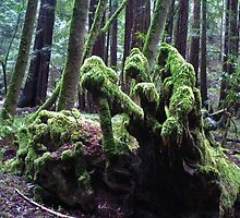 Enchanted In The Great Redwood forest by Linda Miller Gesualdo