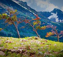 Pines on a rocky ridge in Glacier National Park by Randall Nyhof