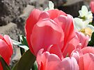 Pink Tulip Flowers Floral Garden art Baslee Troutman by BasleeArtPrints