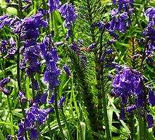 Bluebells and Horsetail by Anne Kingston