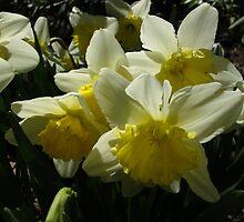 Daffodils by MarianBendeth