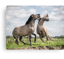 The Mane Event Canvas Print