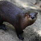 river otter by FLLETCHER