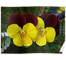 A Flower's Tears - Pretty Violas in Mirrored Frame Poster