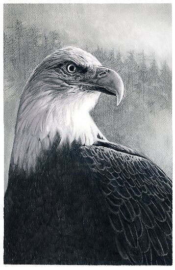 American Bald Eagle by Susana Weber
