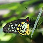 Beautful butterfly. by elphonline