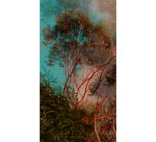 A natural abstraction Photographic Print