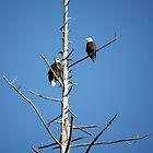 Eagles by Rae Tucker