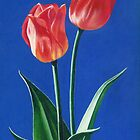 Two Tulips by Janice Dunbar