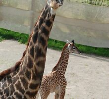 Momma and Baby Girl - Cincinnati Zoo by Kathy Newton