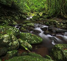 Lamington National Park by Donovan wilson