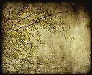 Hidden by Anne Staub