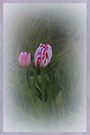Tulip Buds by Elaine Teague