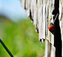 Ladybird by AndrewBerry