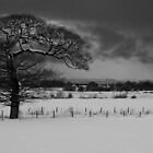 Tree overlooking Musselburgh by KWTImages