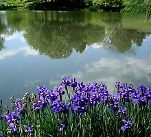 Irises at the Lake  ^ by ctheworld