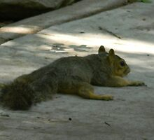 Squirrel Stress by Navigator