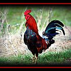 Rooster by AngieBanta