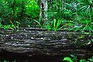 Nature at Work by Margaret Stevens
