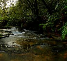 Leura Falls Creek, New South Wales. by Andy Newman