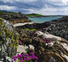 Sea pinks & spring colour, Morar by artyfifi